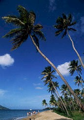 palm trees.jpg (14555 bytes)